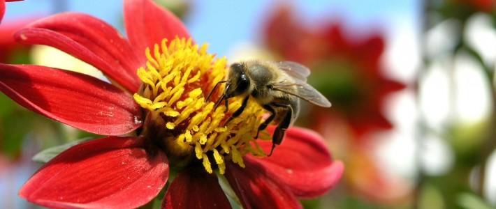 A Gestão e a metáfora das abelhas